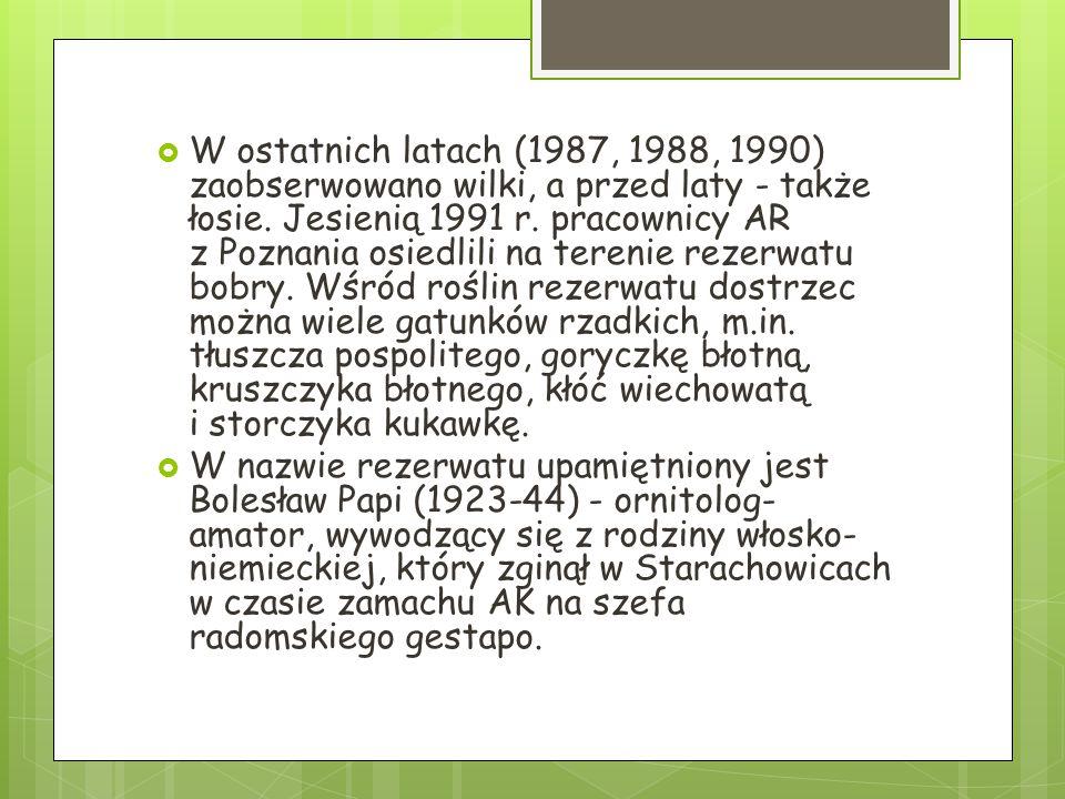  W ostatnich latach (1987, 1988, 1990) zaobserwowano wilki, a przed laty - także łosie. Jesienią 1991 r. pracownicy AR z Poznania osiedlili na tereni