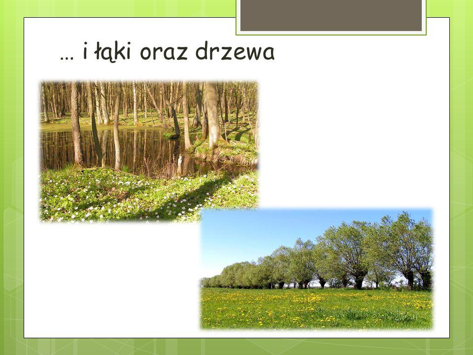 … i łąki oraz drzewa