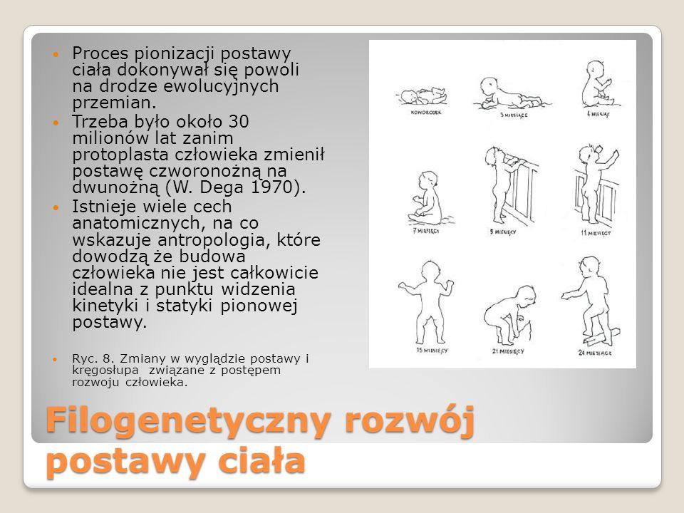 Filogenetyczny rozwój postawy ciała Proces pionizacji postawy ciała dokonywał się powoli na drodze ewolucyjnych przemian.