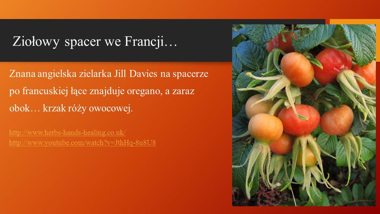 Ziołowy spacer we Francji… Znana angielska zielarka Jill Davies na spacerze po francuskiej łące znajduje oregano, a zaraz obok… krzak róży owocowej. h