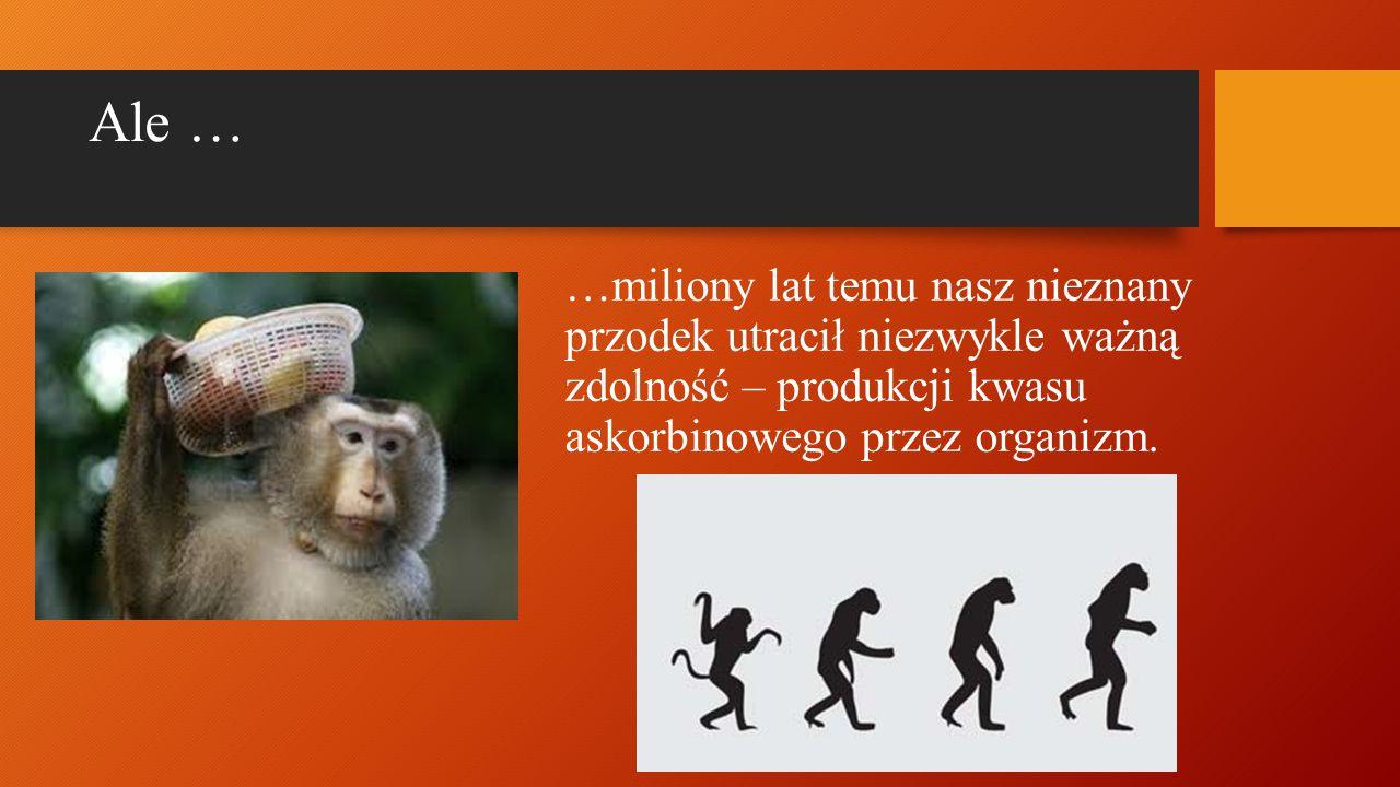 Ale … …miliony lat temu nasz nieznany przodek utracił niezwykle ważną zdolność – produkcji kwasu askorbinowego przez organizm.