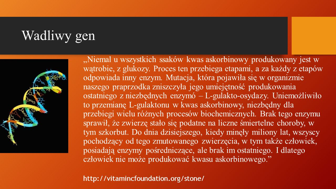 """Wadliwy gen """"Niemal u wszystkich ssaków kwas askorbinowy produkowany jest w wątrobie, z glukozy. Proces ten przebiega etapami, a za każdy z etapów odp"""