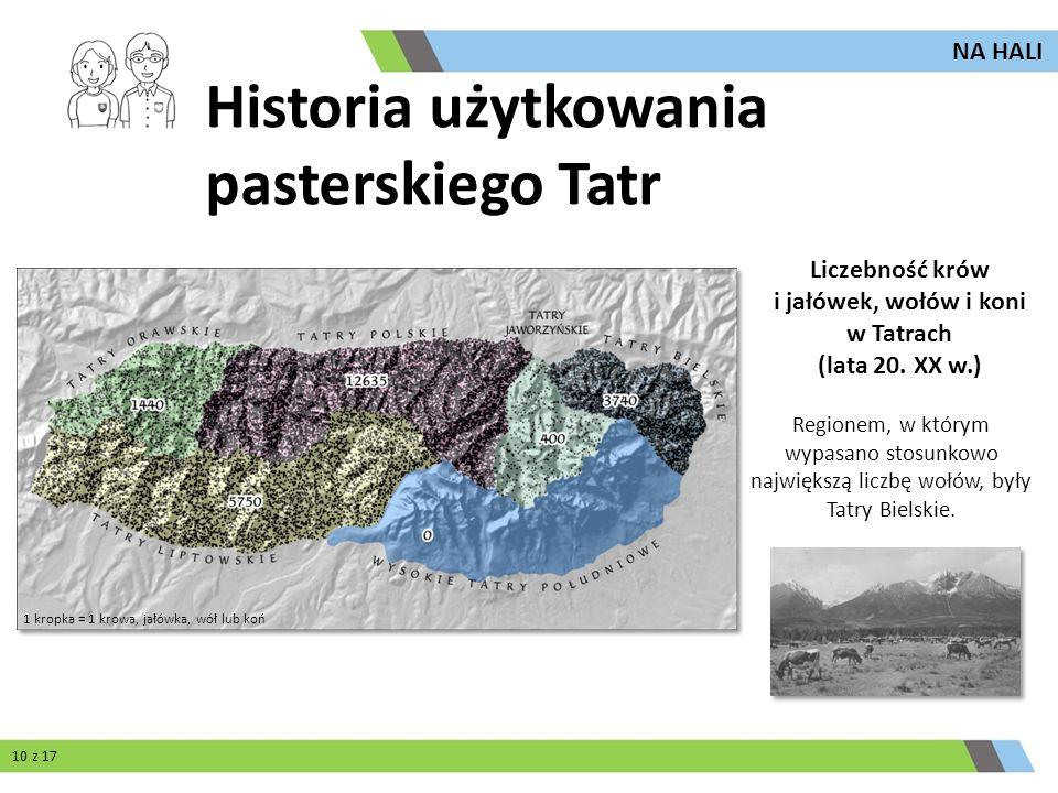 Regionem, w którym wypasano stosunkowo największą liczbę wołów, były Tatry Bielskie. Liczebność krów i jałówek, wołów i koni w Tatrach (lata 20. XX w.