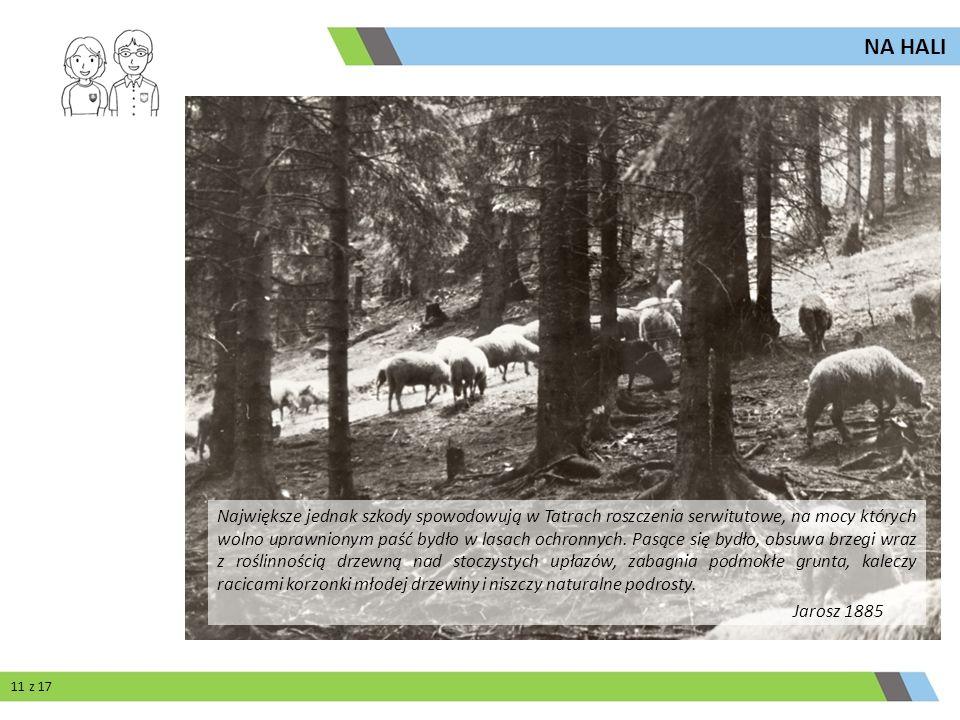 Największe jednak szkody spowodowują w Tatrach roszczenia serwitutowe, na mocy których wolno uprawnionym paść bydło w lasach ochronnych. Pasące się by