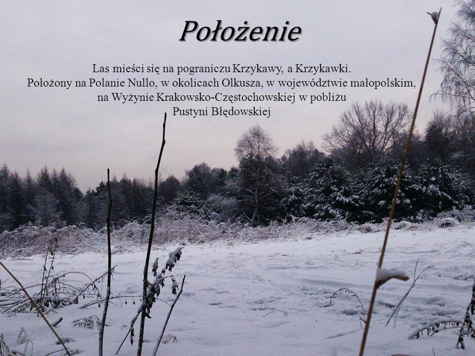 Położenie Las mieści się na pograniczu Krzykawy, a Krzykawki. Położony na Polanie Nullo, w okolicach Olkusza, w województwie małopolskim, na Wyżynie K