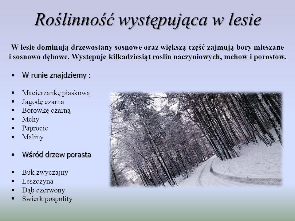 Środowisko zwierząt W lesie tym są optymalne warunki dla ptaków, w którym znajduje się ich ok.