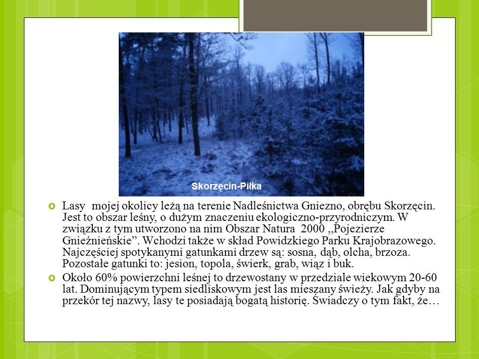  Lasy mojej okolicy leżą na terenie Nadleśnictwa Gniezno, obrębu Skorzęcin. Jest to obszar leśny, o dużym znaczeniu ekologiczno-przyrodniczym. W zwią