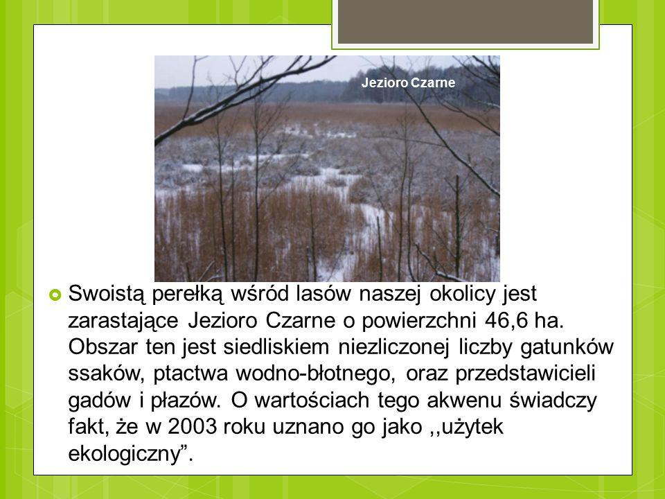  Swoistą perełką wśród lasów naszej okolicy jest zarastające Jezioro Czarne o powierzchni 46,6 ha. Obszar ten jest siedliskiem niezliczonej liczby ga