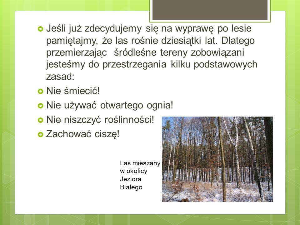  Jeśli już zdecydujemy się na wyprawę po lesie pamiętajmy, że las rośnie dziesiątki lat. Dlatego przemierzając śródleśne tereny zobowiązani jesteśmy