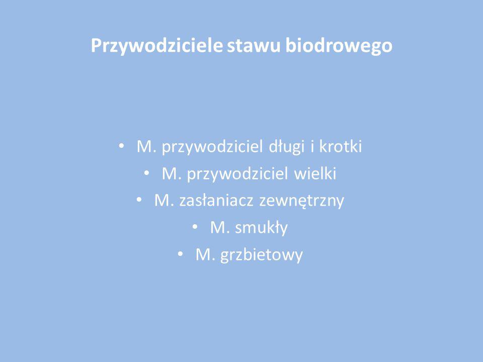 Przywodziciele stawu biodrowego M. przywodziciel długi i krotki M. przywodziciel wielki M. zasłaniacz zewnętrzny M. smukły M. grzbietowy
