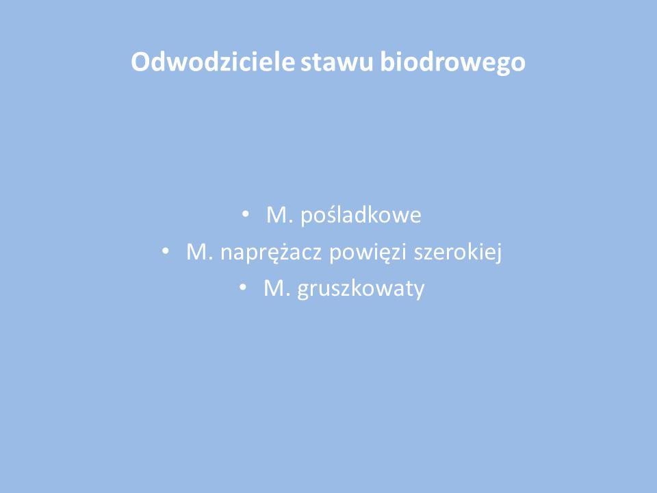 Odwodziciele stawu biodrowego M. pośladkowe M. naprężacz powięzi szerokiej M. gruszkowaty