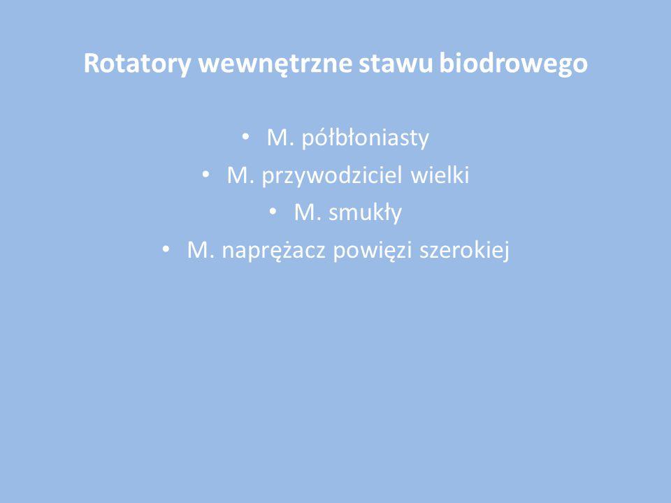 Rotatory wewnętrzne stawu biodrowego M. półbłoniasty M. przywodziciel wielki M. smukły M. naprężacz powięzi szerokiej