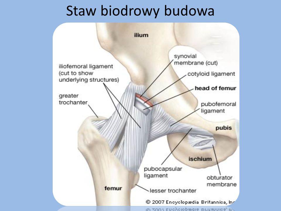 Działania przeciwbólowe Pozycja antalgiczna, początkowo w szynie Schładzanie lodem bolesnych miejsc po ćwiczeniach leczniczych (ok.