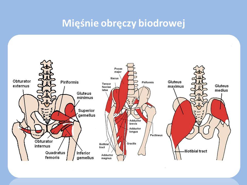 Czas średni przygotowania - 4 tygodnie Terapia manualna – w przypadku ograniczeń ruchomości – trakcja stawu biodrowego – rozciąganie powięzi bocznej – rozciąganie mięśnia gruszkowatego Ćwiczenia rozciągające – mięśnie biodrowo-lędźwiowe – mięsień prosty uda – mięsień naprężacz powięzi szerokiej – mięśnie grupy kulszowo goleniowej Ćwiczenia wzmacniające – mięsień pośladkowy wielki i średni