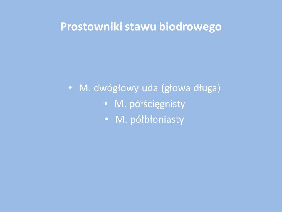 Prostowniki stawu biodrowego M. dwógłowy uda (głowa długa) M. półścięgnisty M. półbłoniasty