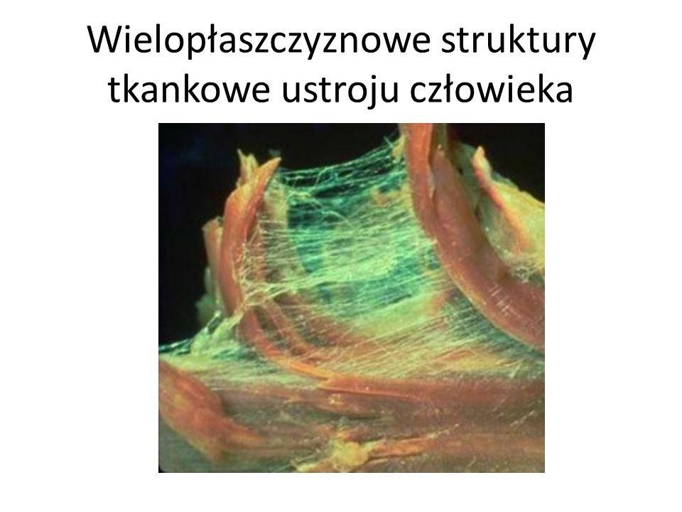 Wielopłaszczyznowe struktury tkankowe ustroju człowieka