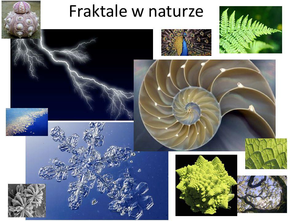 Fraktale w naturze