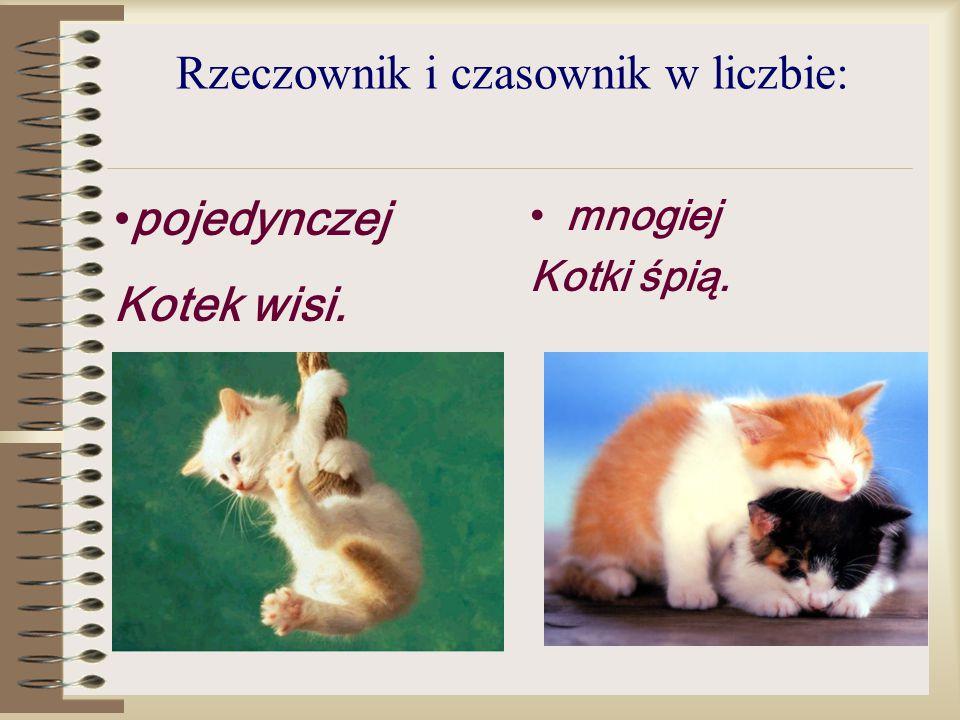 Rzeczownik i czasownik w liczbie: mnogiej Kotki śpią. pojedynczej Kotek wisi.