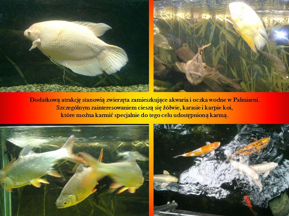 Dodatkow ą atrakcj ę stanowi ą zwierz ę ta zamieszkuj ą ce akwaria i oczka wodne w Palmiarni.