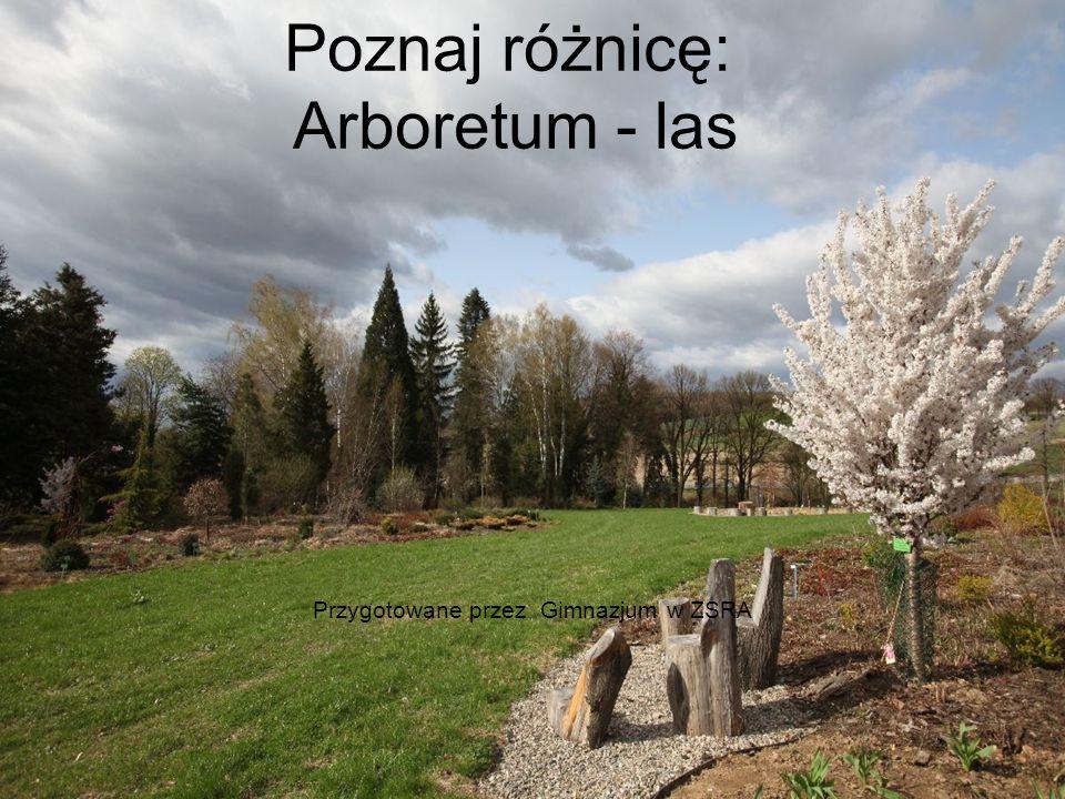 Poznaj różnicę: Arboretum - las Przygotowane przez Gimnazjum w ZSRA
