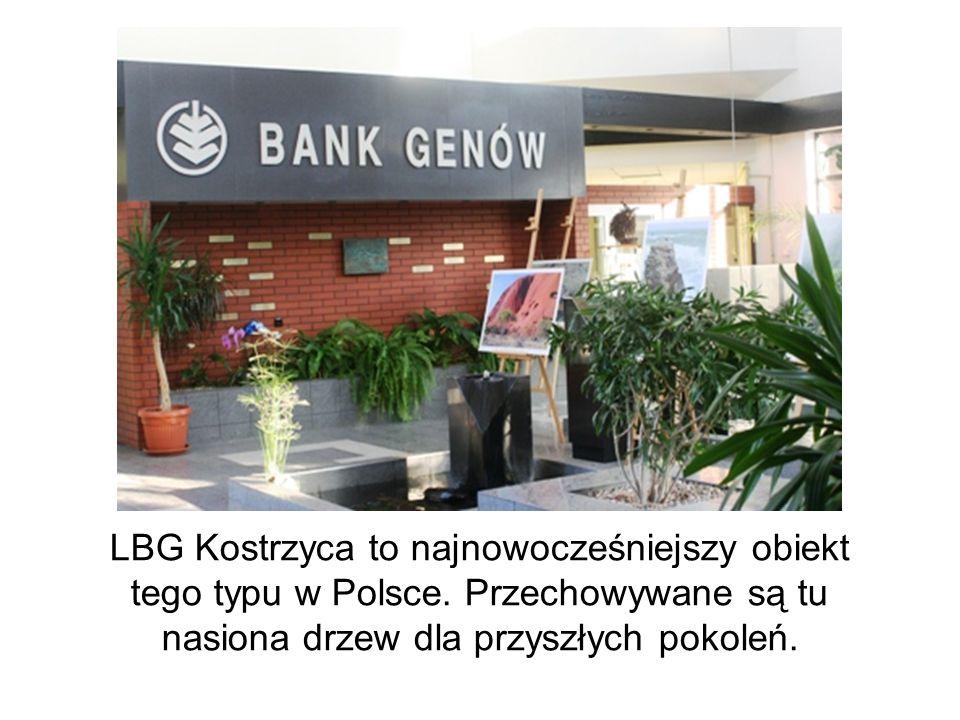 LBG Kostrzyca to najnowocześniejszy obiekt tego typu w Polsce. Przechowywane są tu nasiona drzew dla przyszłych pokoleń.