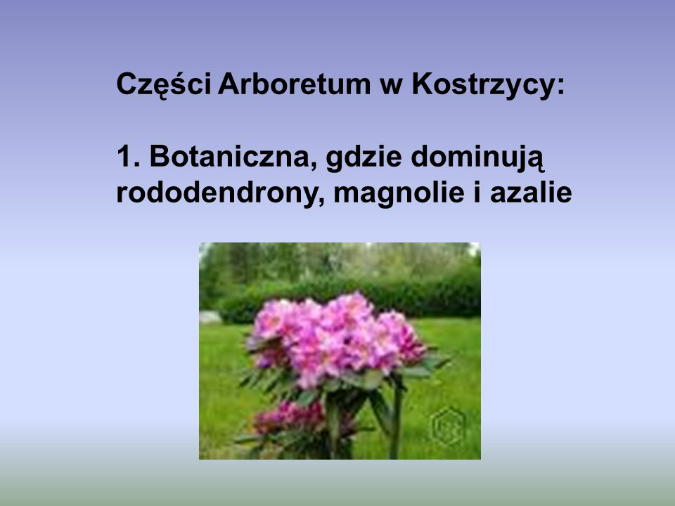 Części Arboretum w Kostrzycy: 1. Botaniczna, gdzie dominują rododendrony, magnolie i azalie