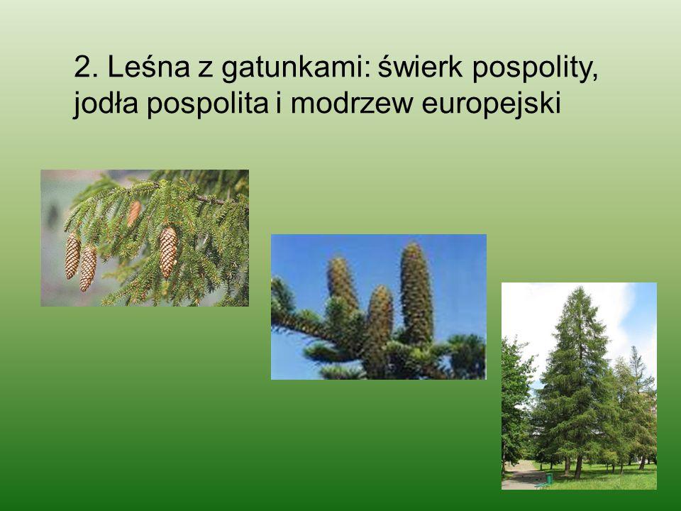 2. Leśna z gatunkami: świerk pospolity, jodła pospolita i modrzew europejski
