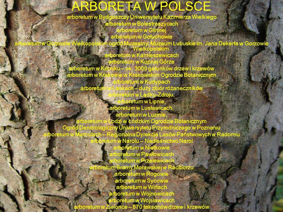 ARBORETA W POLSCE arboretum w Bydgoszczy Uniwersytetu Kazimierza Wielkiego arboretum w Bolestraszycach arboretum w Glinnej arboretum w Gołuchowie arbo