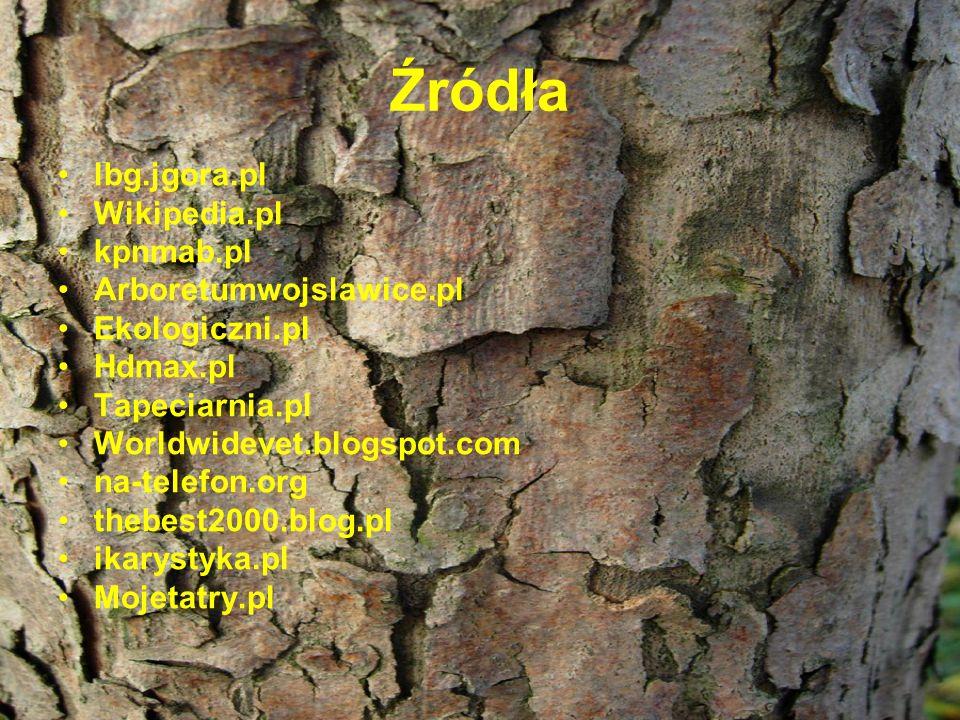 Źródła lbg.jgora.pl Wikipedia.pl kpnmab.pl Arboretumwojslawice.pl Ekologiczni.pl Hdmax.pl Tapeciarnia.pl Worldwidevet.blogspot.com na-telefon.org theb