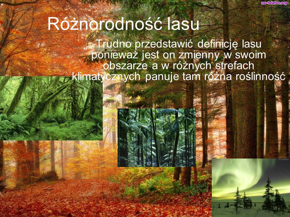 Różnorodność lasu Trudno przedstawić definicję lasu ponieważ jest on zmienny w swoim obszarze a w różnych strefach klimatycznych panuje tam różna rośl