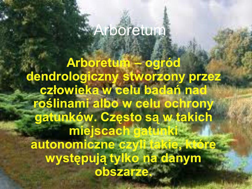 Arboretum Arboretum – ogród dendrologiczny stworzony przez człowieka w celu badań nad roślinami albo w celu ochrony gatunków. Często są w takich miejs