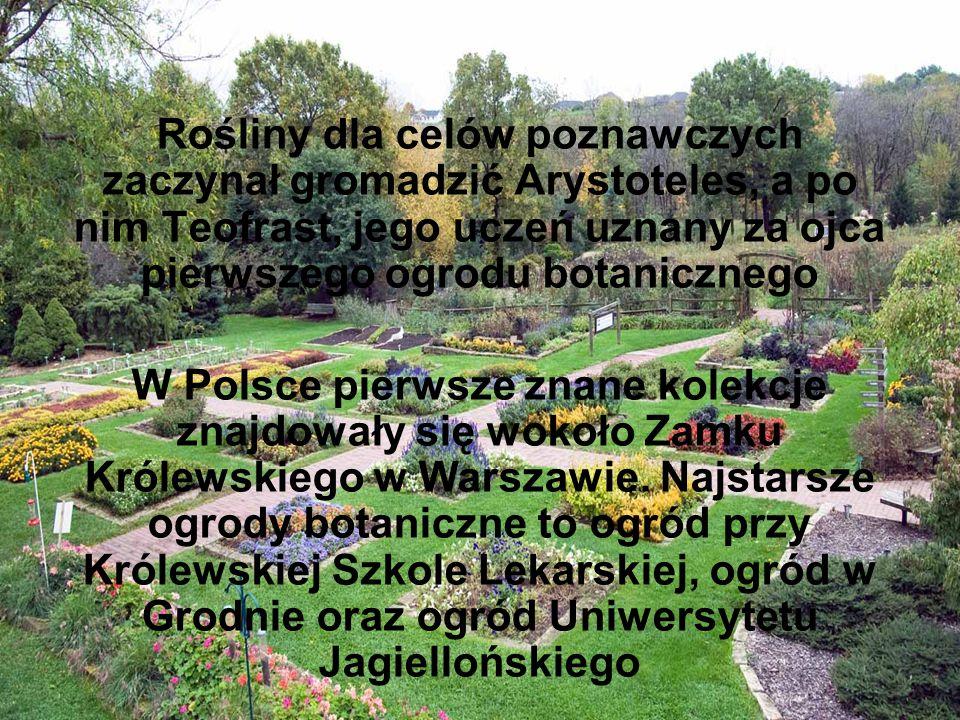Rośliny dla celów poznawczych zaczynał gromadzić Arystoteles, a po nim Teofrast, jego uczeń uznany za ojca pierwszego ogrodu botanicznego W Polsce pie