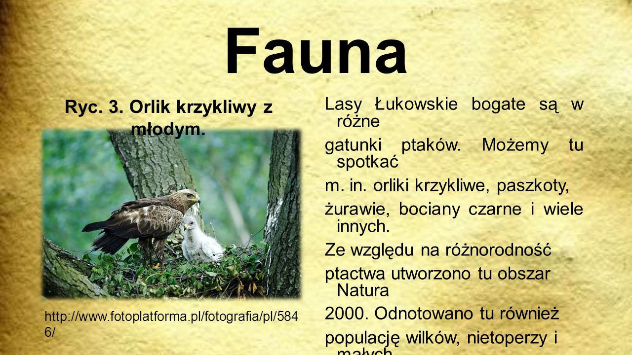 Fauna Lasy Łukowskie bogate są w różne gatunki ptaków. Możemy tu spotkać m. in. orliki krzykliwe, paszkoty, żurawie, bociany czarne i wiele innych. Ze