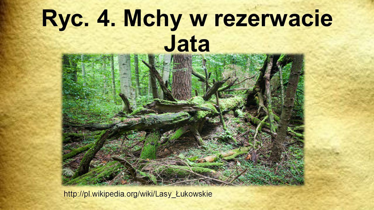 Ryc. 4. Mchy w rezerwacie Jata http://pl.wikipedia.org/wiki/Lasy_Łukowskie