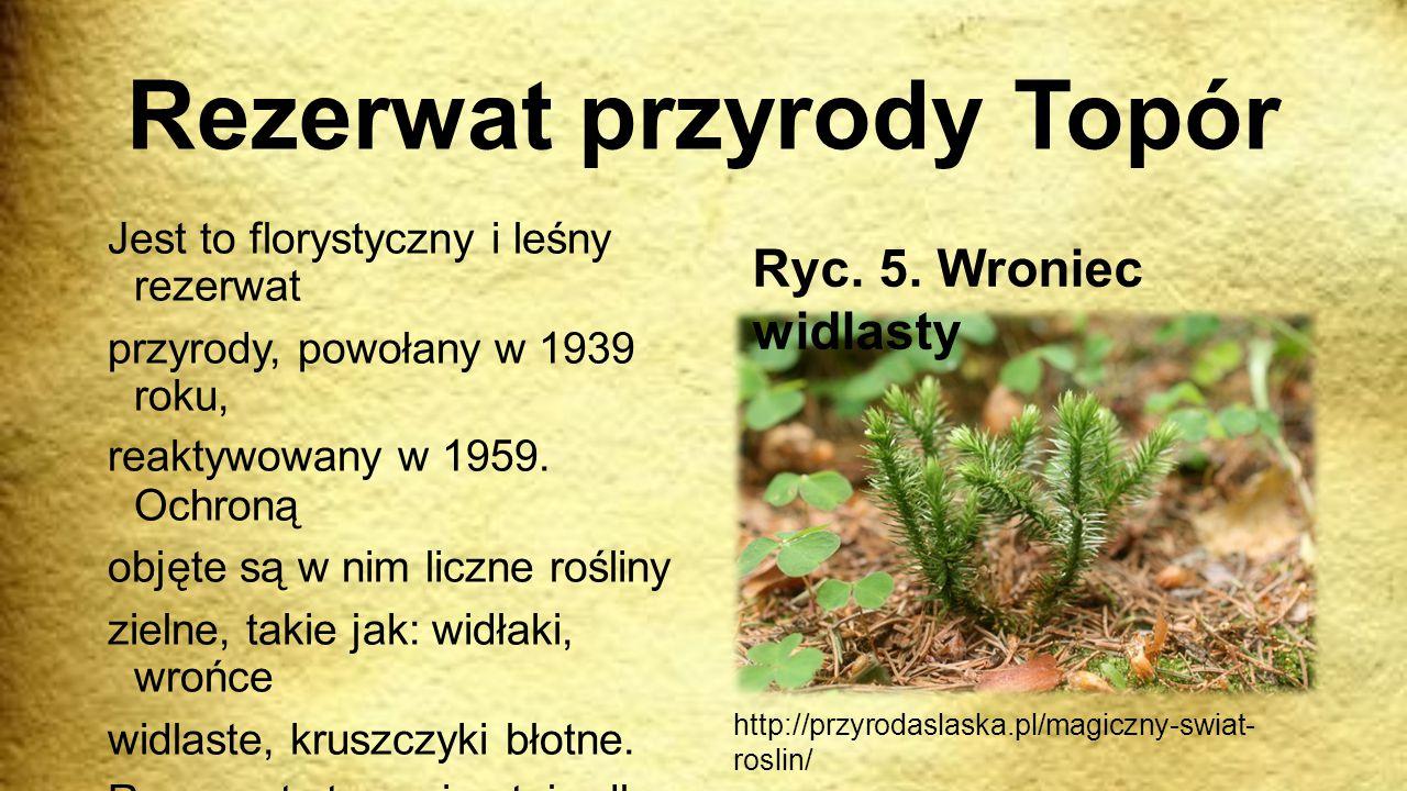 Rezerwat przyrody Topór Jest to florystyczny i leśny rezerwat przyrody, powołany w 1939 roku, reaktywowany w 1959. Ochroną objęte są w nim liczne rośl