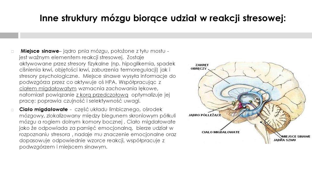 Inne struktury mózgu biorące udział w reakcji stresowej:  Miejsce sinawe – jądro pnia mózgu, położone z tyłu mostu - jest ważnym elementem reakcji st