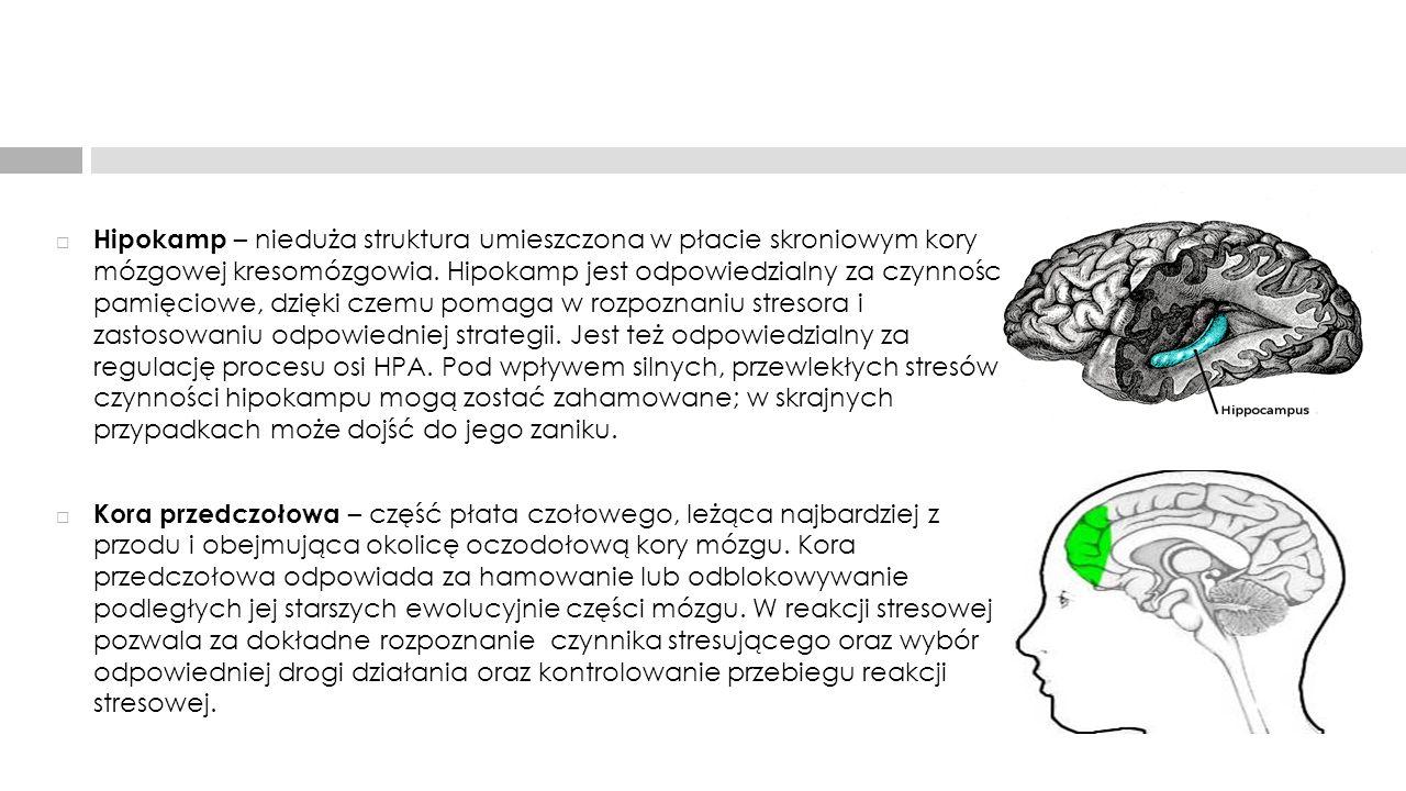  Hipokamp – nieduża struktura umieszczona w płacie skroniowym kory mózgowej kresomózgowia. Hipokamp jest odpowiedzialny za czynności pamięciowe, dzię