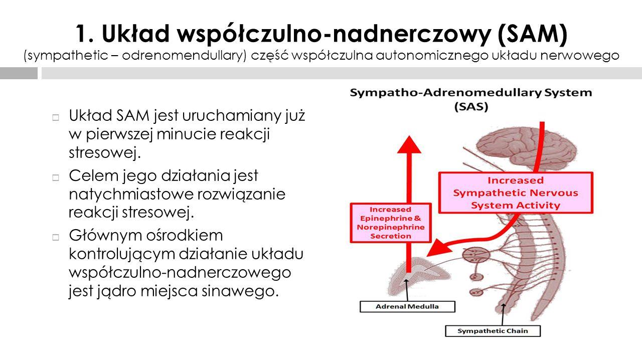 Neurohormony biorące udział w układzie SAM to :  Noradrenalina (wydzielana przez komórki pozazwojowe)  Katecholaminy (wydzielane przez komórki nadnerczy) Powyższe hormony działając na narządy ciała przygotowując organizm do podjęcia aktywności tzw.