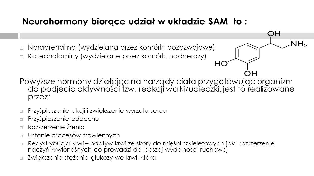 Neurohormony biorące udział w układzie SAM to :  Noradrenalina (wydzielana przez komórki pozazwojowe)  Katecholaminy (wydzielane przez komórki nadne