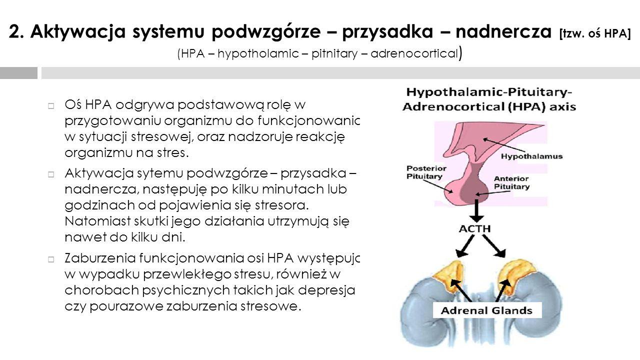 2. Aktywacja systemu podwzgórze – przysadka – nadnercza [tzw. oś HPA] (HPA – hypotholamic – pitnitary – adrenocortical )  Oś HPA odgrywa podstawową r