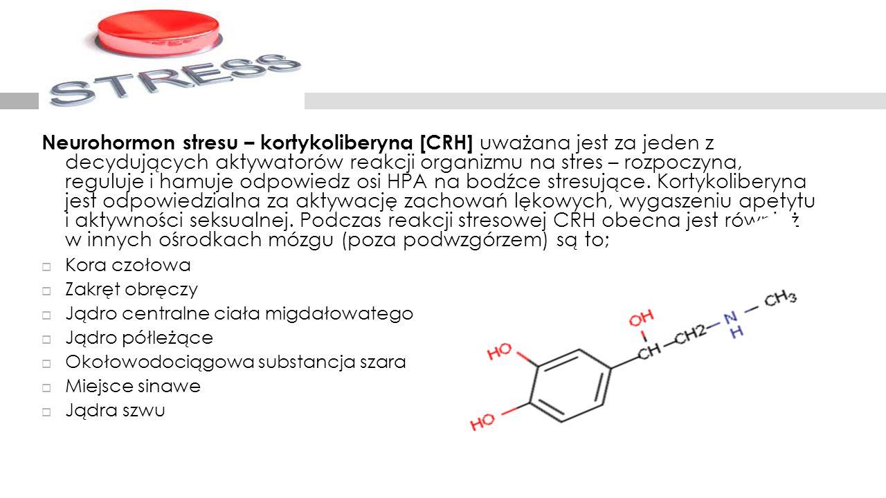 Neurohormon stresu – kortykoliberyna [CRH] uważana jest za jeden z decydujących aktywatorów reakcji organizmu na stres – rozpoczyna, reguluje i hamuje