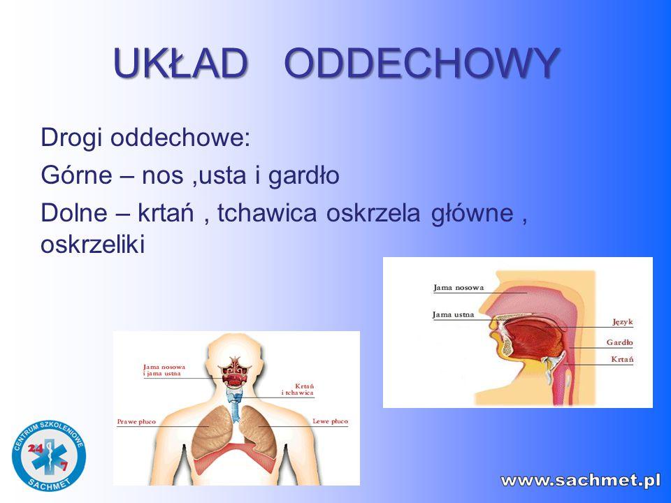 UKŁAD ODDECHOWY Drogi oddechowe: Górne – nos,usta i gardło Dolne – krtań, tchawica oskrzela główne, oskrzeliki