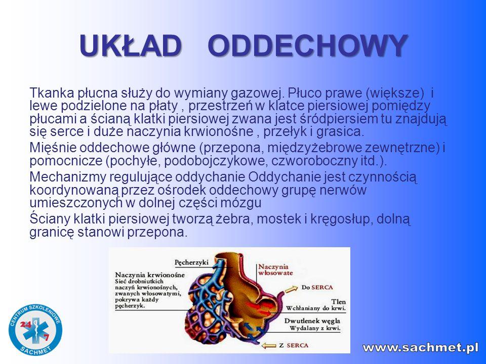 UKŁAD ODDECHOWY Tkanka płucna służy do wymiany gazowej. Płuco prawe (większe) i lewe podzielone na płaty, przestrzeń w klatce piersiowej pomiędzy płuc