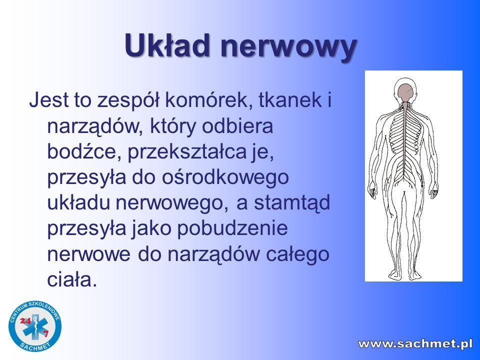 UKŁAD NERWOWY Składa się z ośrodkowego i obwodowego układu nerwowego Ośrodkowy układ nerwowy to mózg znajdujący się w jamie czaszki i rdzeń kręgowy położony w kanale kręgowym kręgosłupa