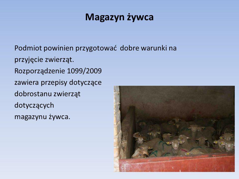 Magazyn żywca Podmiot powinien przygotować dobre warunki na przyjęcie zwierząt. Rozporządzenie 1099/2009 zawiera przepisy dotyczące dobrostanu zwierzą