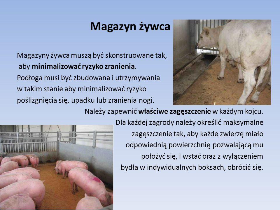 Magazyn żywca Magazyny żywca muszą być skonstruowane tak, aby minimalizować ryzyko zranienia. Podłoga musi być zbudowana i utrzymywania w takim stanie
