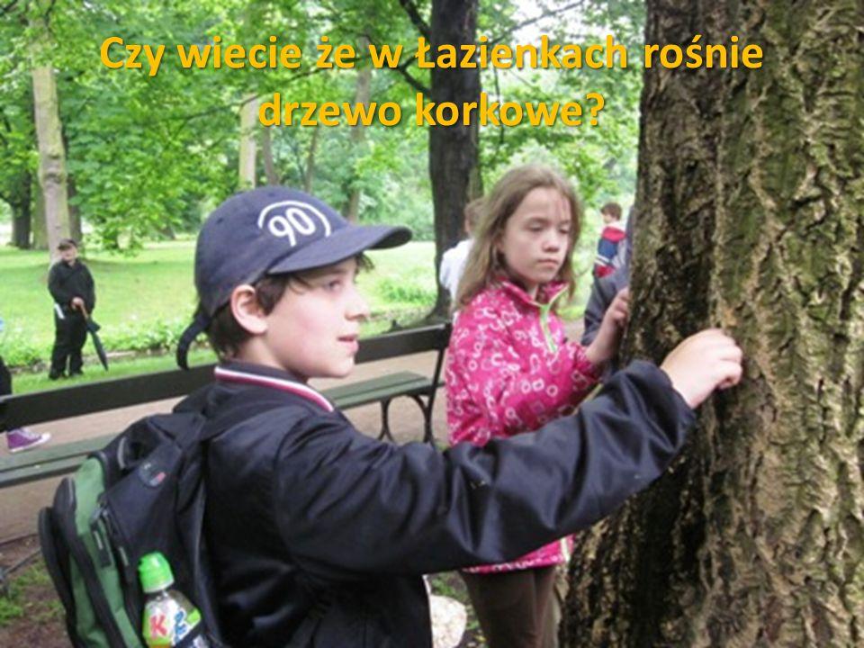 Czy wiecie że w Łazienkach rośnie drzewo korkowe?