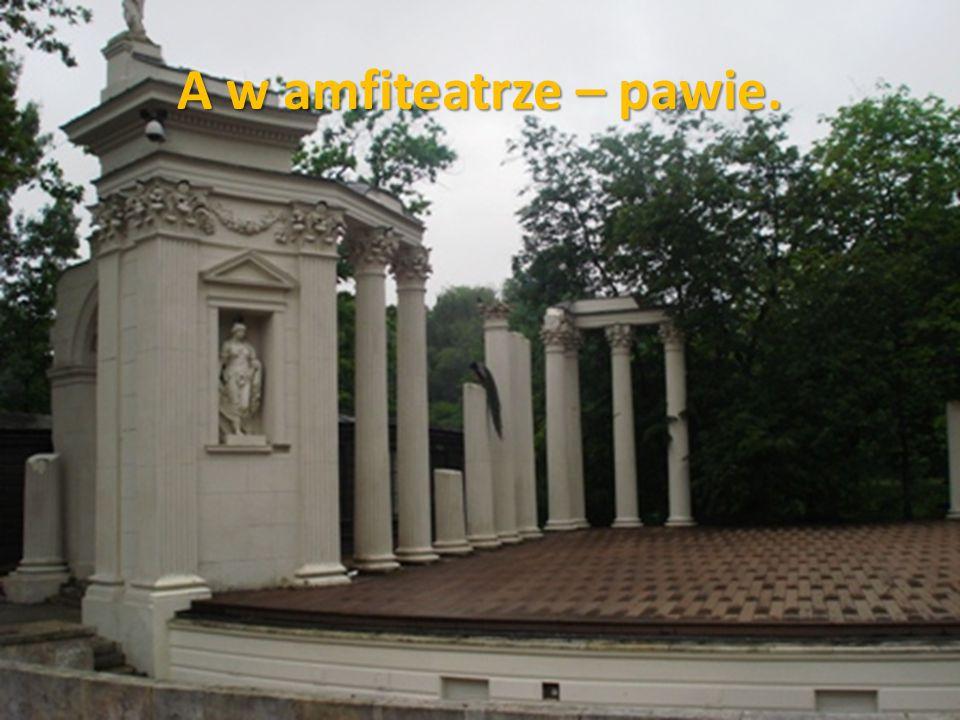 A w amfiteatrze – pawie.