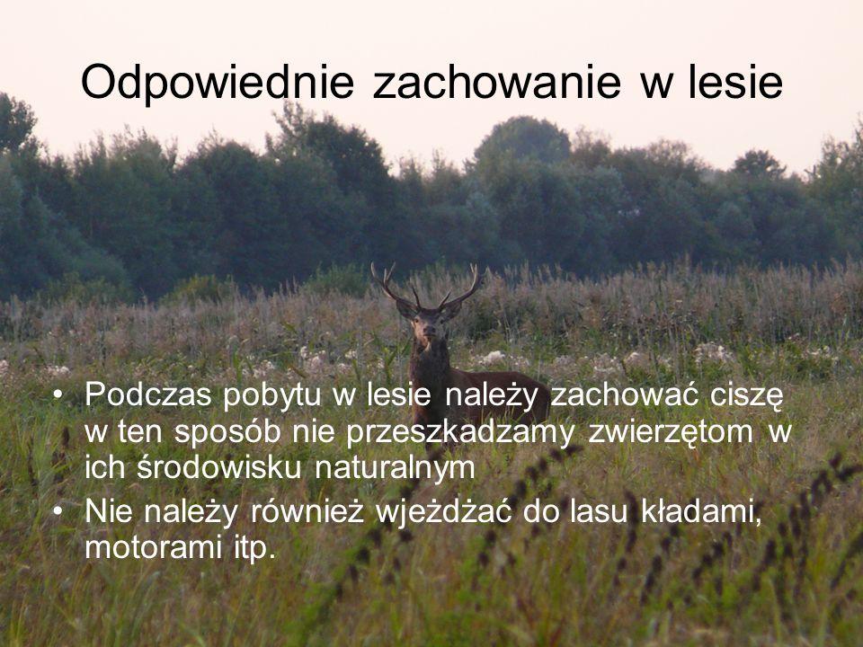 Odpowiednie zachowanie w lesie Podczas pobytu w lesie należy zachować ciszę w ten sposób nie przeszkadzamy zwierzętom w ich środowisku naturalnym Nie