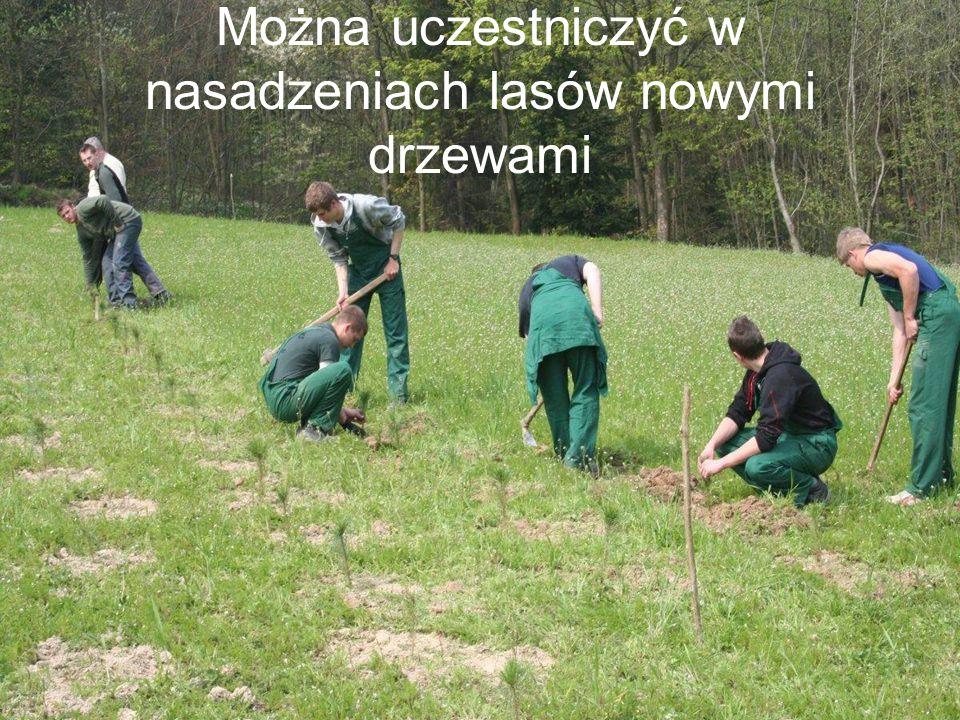Można uczestniczyć w nasadzeniach lasów nowymi drzewami